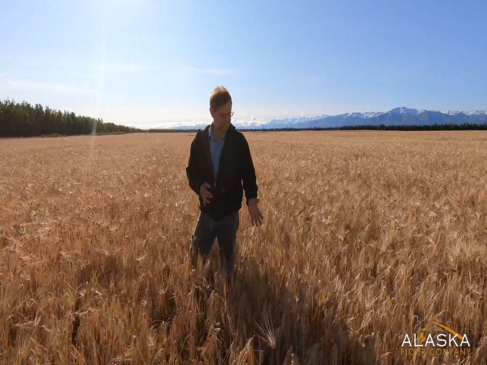 Farmer Bryce Wrigley stands in his fields of barley.  He switched to a no-till method of...