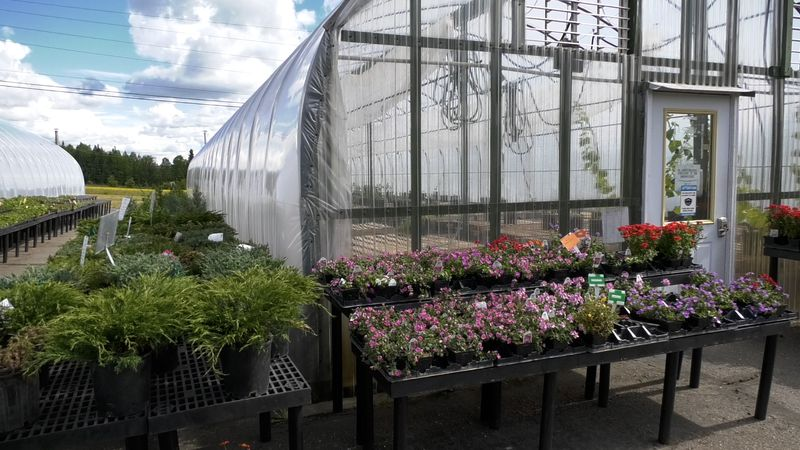 Rows of plants are seen at Plant Kingdom in Fairbanks.