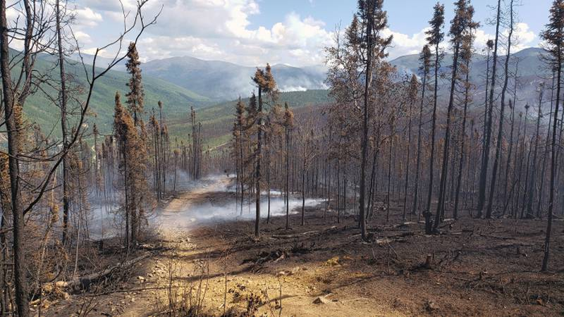 The Ridge Trail above Chena Hot Springs Resort after being burned over by the Munson Creek Fire...