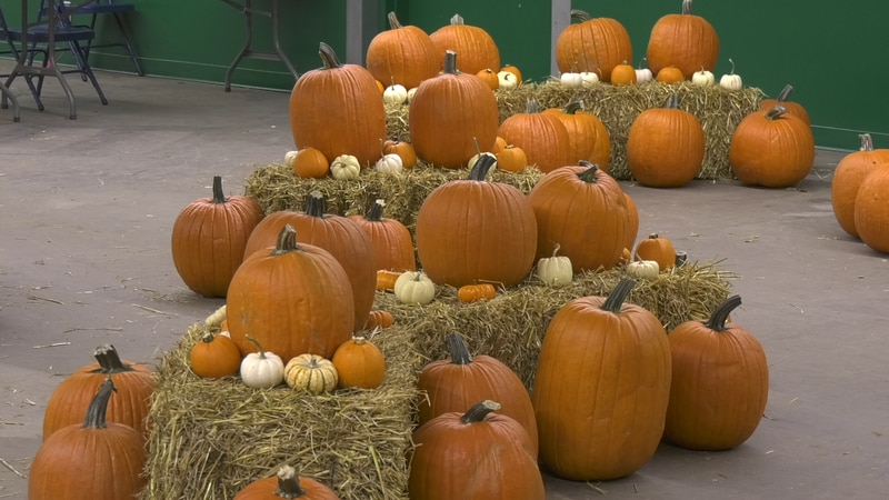 Fairbanks Tanana Valley State Fair will be hosting a Fall Festival, and is seeking volunteers...
