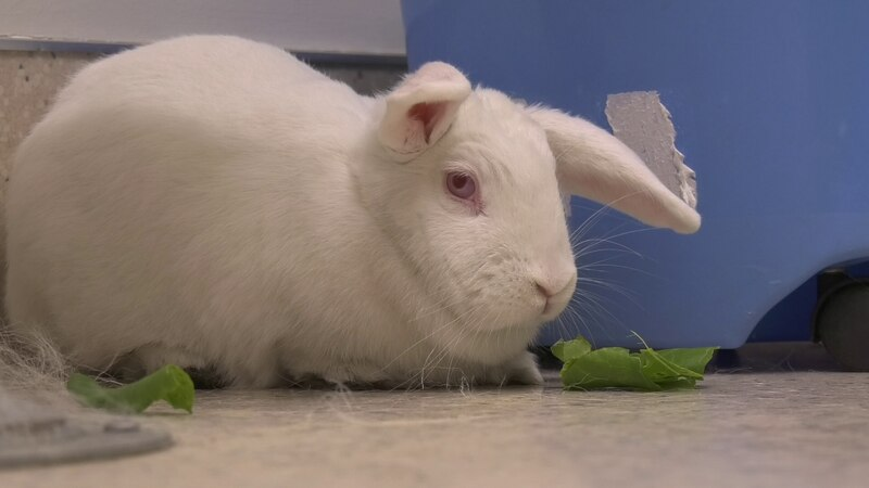 Rosie is an adorable bunny with a love for fresh greens and she's looking for a new forever...