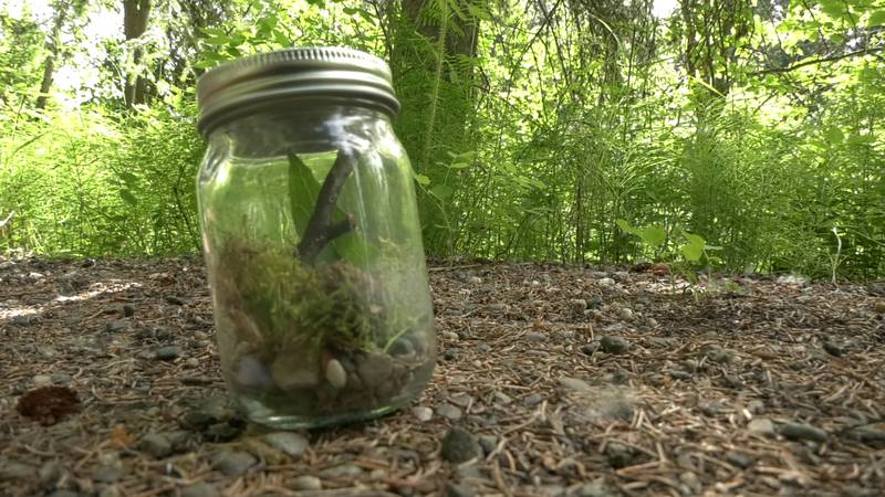 The North Pole STEM and Nature Academy students collected insects and examples of Alaska's...