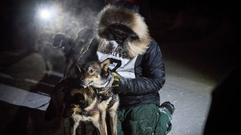 Dan Kaduce, the Summit Quest 300 Champion, celebrates with his lead dogs after reaching the...
