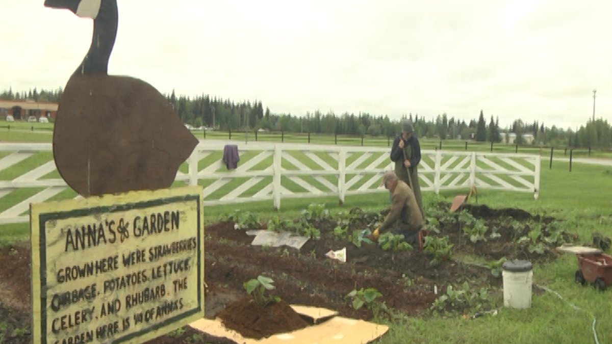 The Fairbanks Garden Club tending to Anna's Garden at Creamer's Field.<br />(Credit: Sarah...