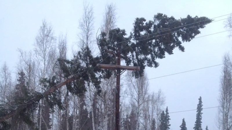 Trees falling on power lines creates a hazardous environment all around the incident, as the...