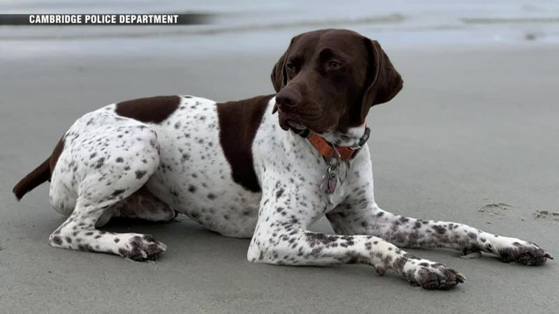 A stolen dog is returned to its owner after a news team spots it on the street.