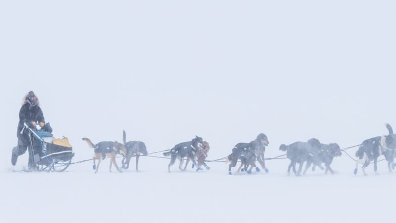 Mushers powered through the weather during the 2021 Kobuk 440. (Photo Whitney McLaren...