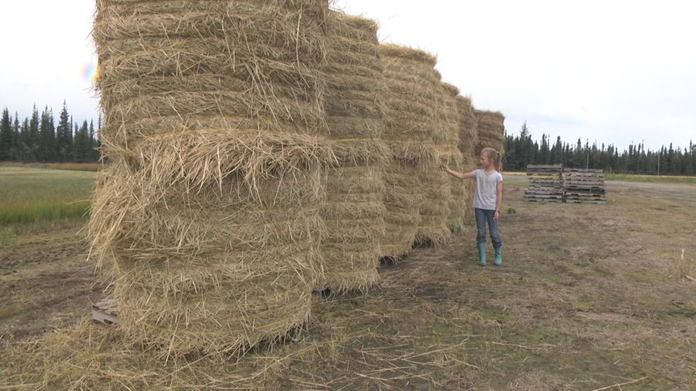 Grass bails waiting to be mechanically ground up to start the composting process.