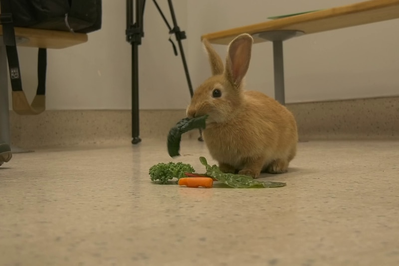 Roquefort is an adventurous little bunny with a healthy love of leafy greens.
