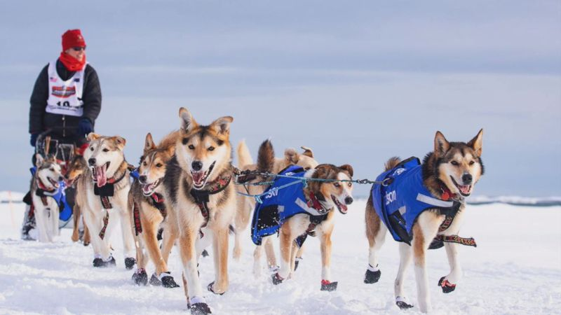 Musher Aliy Zirkle creates Husky Homeroom, a weekly virtual field trip for students and educators