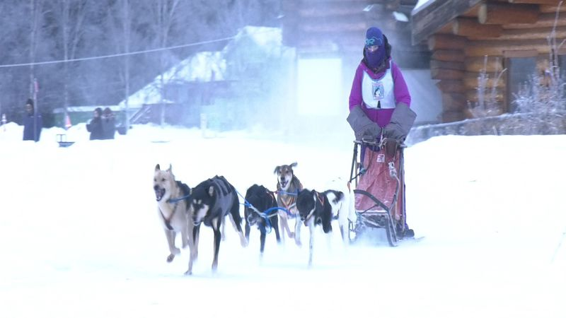 A musher takes off from the Mushers Hall for the first preliminary races of 2021 for the Alaska...