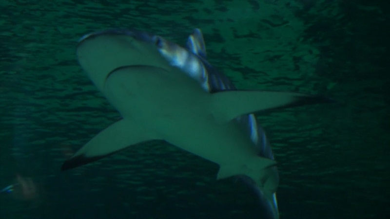The ATIA hosts an annual Shark Tank inspired business contest