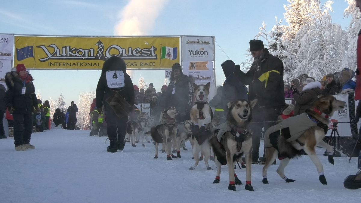 Dogs excitedly wait to begin their 1,000-mile journey to Whitehorse, Yukon Territory in Canada. (John Dougherty/KTVF)