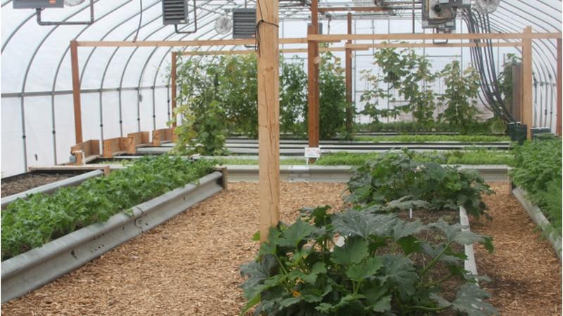 Biomass Greenhouse Interior