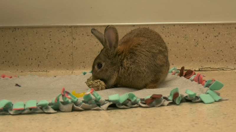 Finnigan the bunny playing with his toy.