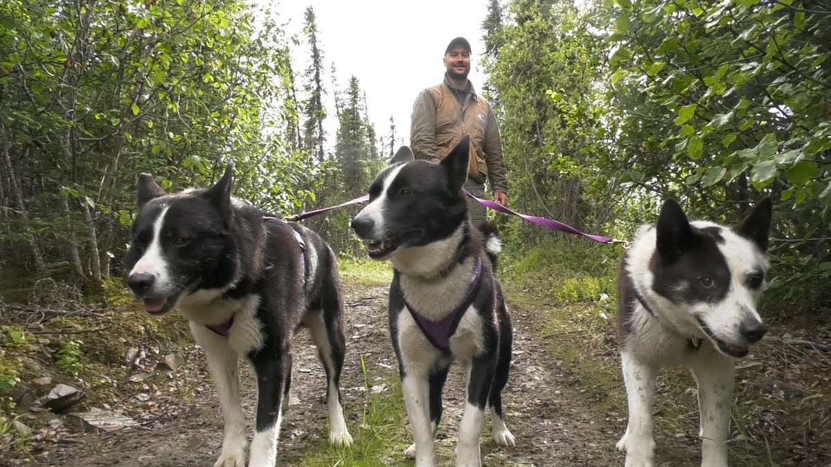 Nils Pedersen and his three Karelian Bear Dogs. The dogs allow handlers like Pedersen try and train bears to avoid human contact. (John Dougherty/KTVF)