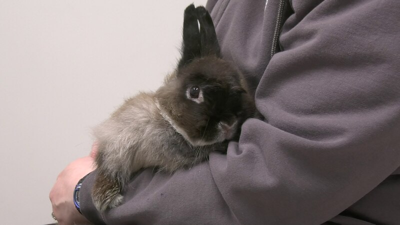 Honey is a adorable fluffy bunny looking for her new forever home.