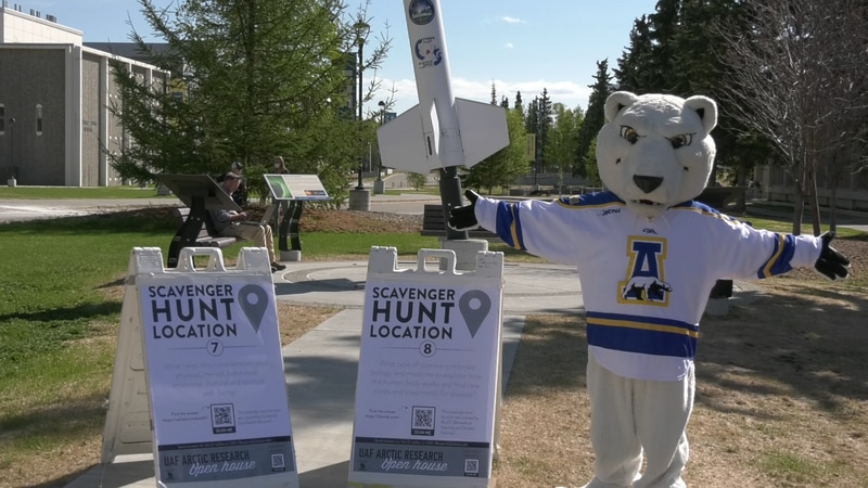 At UAF campus, scavenger hunt sandwich boards are hidden at 12 locations by university mascot...