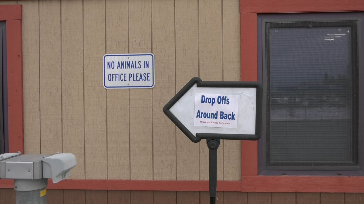 The Fairbanks North Star Borough Animal Shelter is still open for drop-offs and adoptions but they have made changes to keep employees and the public safe. (John Dougherty/KTVF)