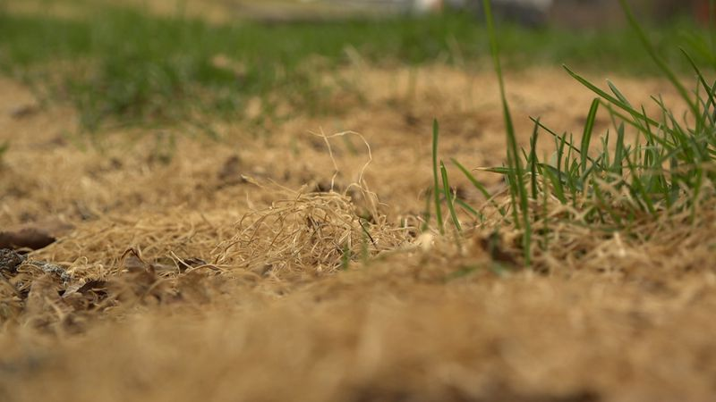 A tuft of dry grass. With just a minor spark, the Division of Forestry says this could easily...