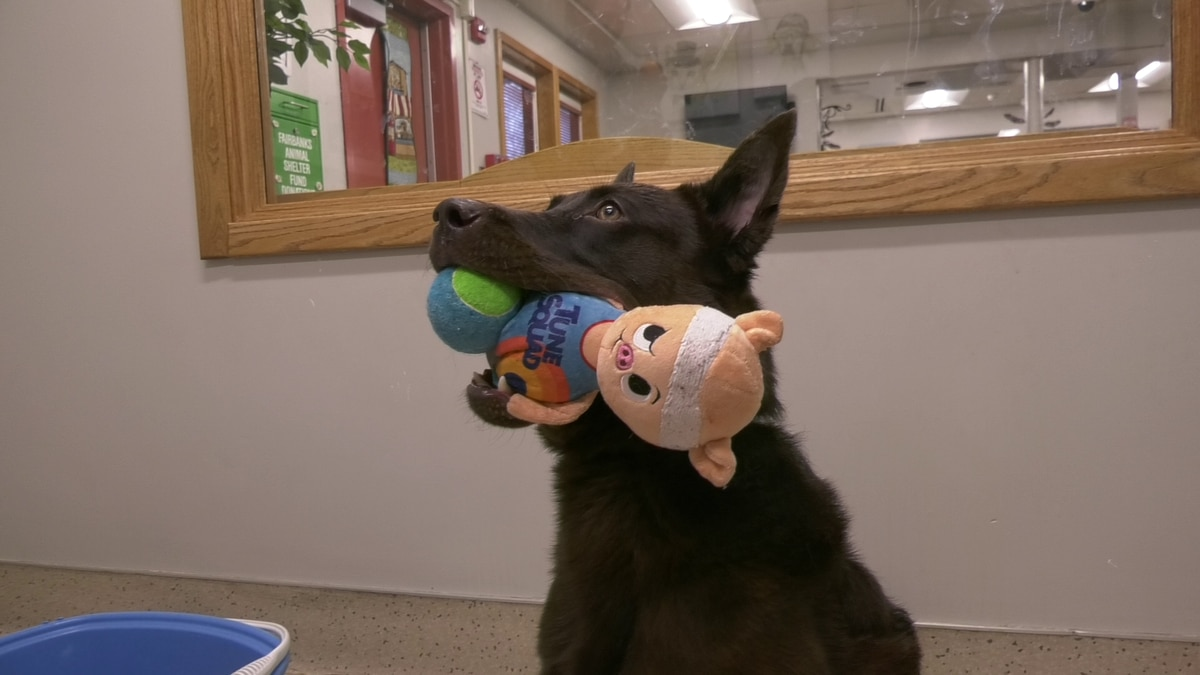 Luke is a energetic and fun loving dog who has a lot of love to share with his new forever home.