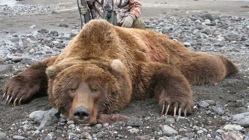 Those looking to match their hunting skills against some of the most coveted species in Alaska...