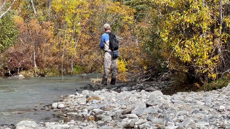 The Alaska Department of Fish and Game has recently launched a radio telemetry study to track...