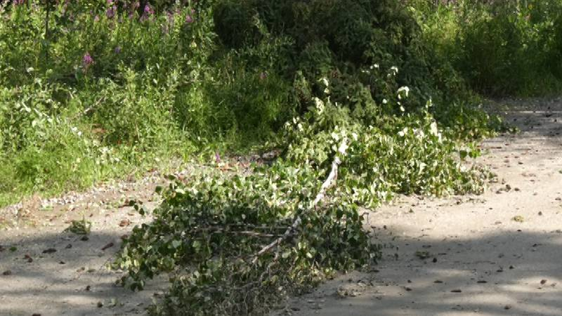 The Badger Road area of North Pole was struck with a weather event on Tuesday, August 3,...
