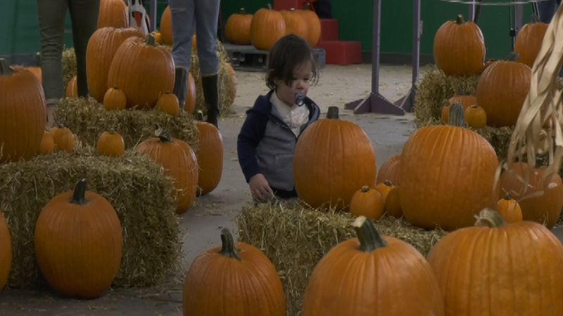 Families searched for the perfect pumpkin Saturday at the fairgrounds.