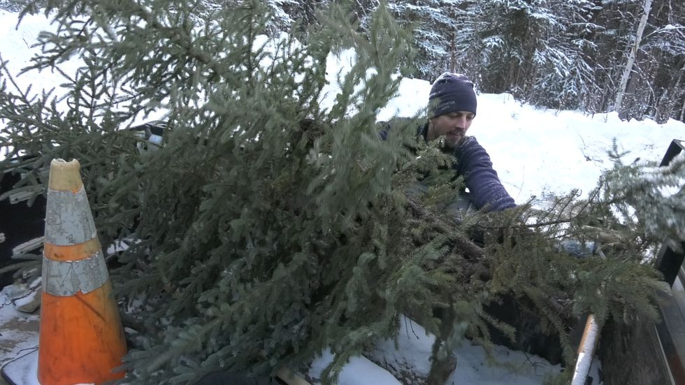 Allaby loads his trees into his truck to bring back to the DNR offices to thaw and decorate.