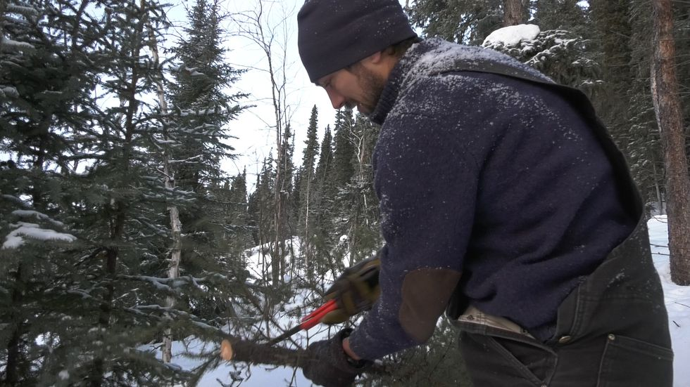 Allaby cutting the lower branches off of a freshly cut Christmas tree.